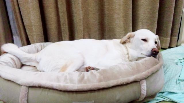ふゆのベッド